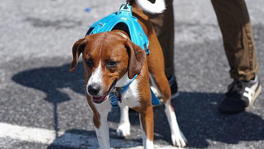 Leash Training - Simple Dog Training Methods