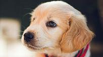 Puppies - A-Z Guide To Puppy & Dog Training