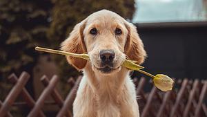 Stop Dog Attacks - Easy Dog Training Methods